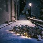 Seleccionar un árbol de Navidad